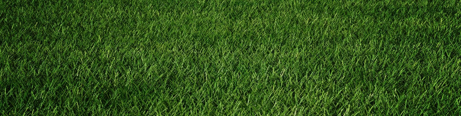 Grass_Hero_1900x480