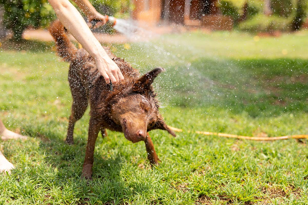 conserve-water-in-summer---wash-pets-outside