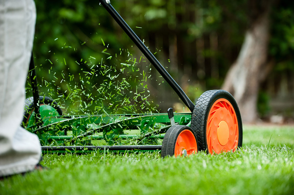 grass-clippings-in-text
