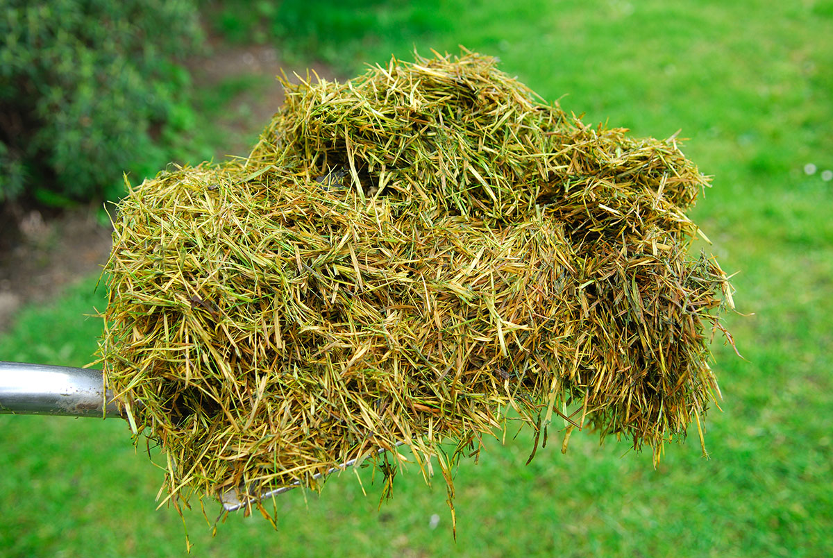 grass-clippings-in-text02